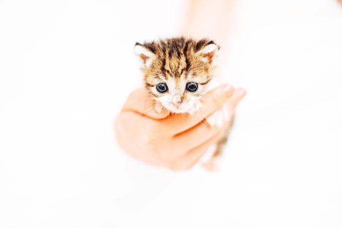 Katze Cat Baby Babykatze Babycat Simon knittel fotograf maulbronn foto
