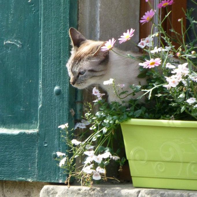 Samedi 2 Juin 2012 : De Presles-Courcelles à Orry-la-Ville