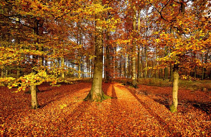 Goldener Herbst - Golden Autumn