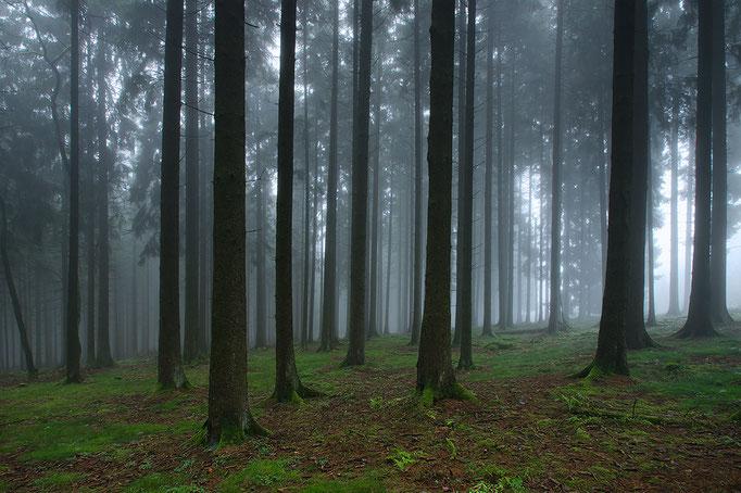 Nebelwald