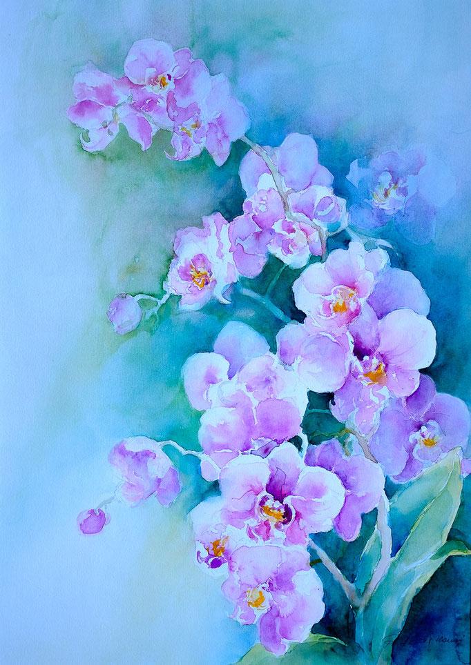 Orchidee (Aquarell, 51 cm x 35 cm)