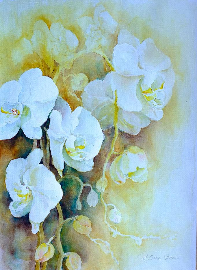 Weiße Orchideen (Aquarell, 50 cm x 36 cm)