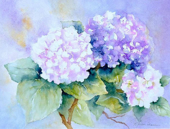 Hortensie (Aquarell, 31 cm x 23 cm)