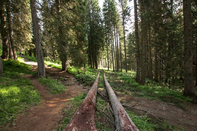 Dentro il bosco