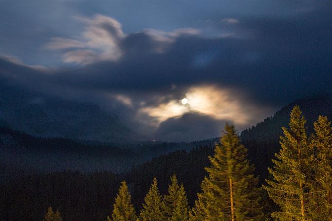 La Luna sul bosco