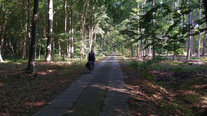 """""""Kolonnenweg"""" an der ehemaligen deutsch-deutschen Grenze. Foto: Kathrin Arlt"""