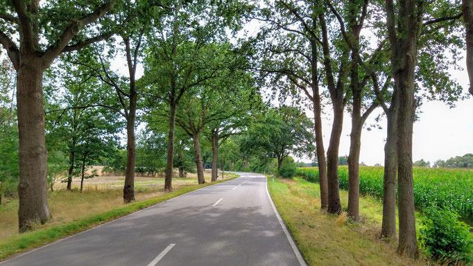 Straßenbaumallee in der Altmark. Foto: Kathrin Arlt