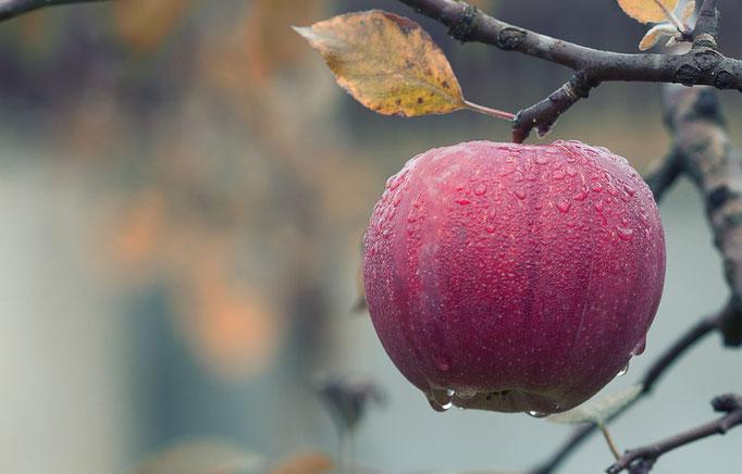 Manzanas, una de las mejores protecciones contra resfriados