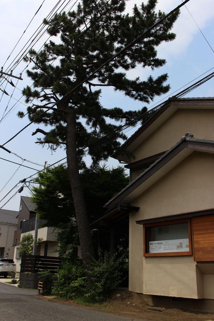松の木が目印
