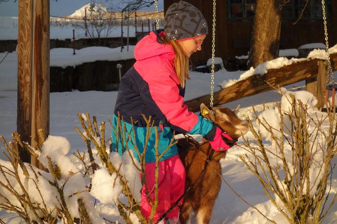 Ziege mit Mädchen im Winter am Biobauernhof Stadler