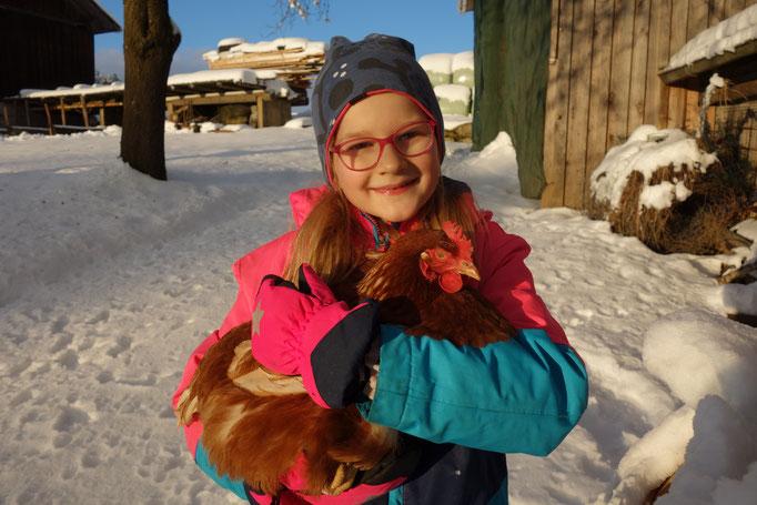 Henne im Winter am Biobauernhof Stadler