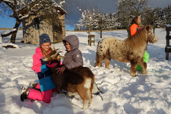 Tiere im Winter am Biobauernhof Stadler