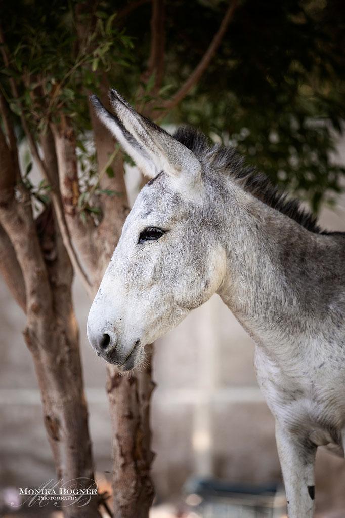 Esel, Pferdeschooting bei Wolkes Horse Paradise