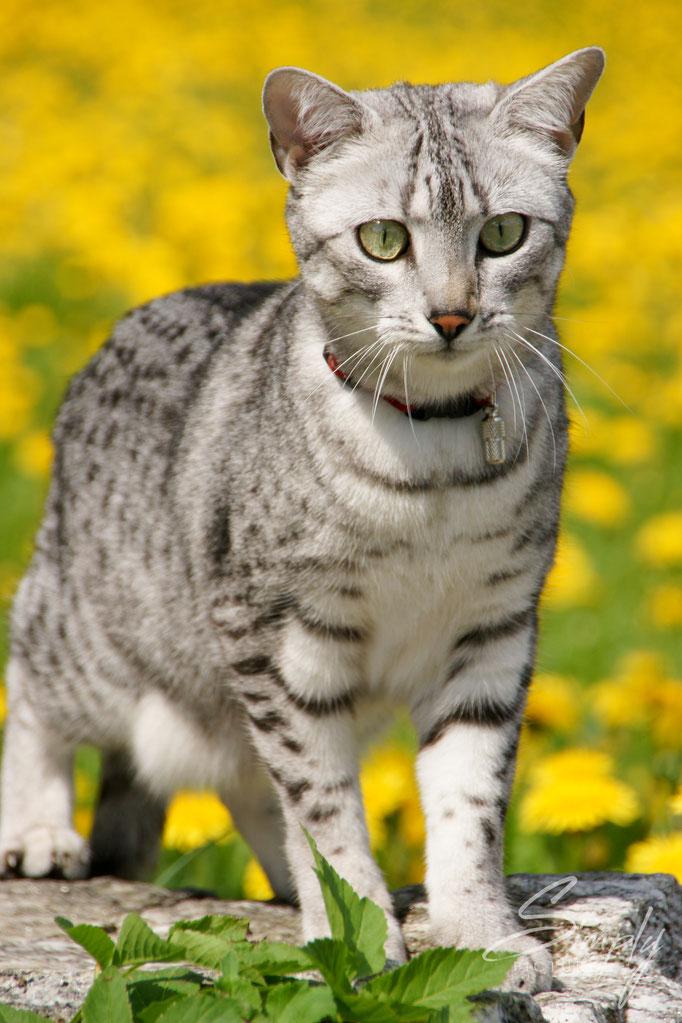 Katze im gelben Blumenfeld