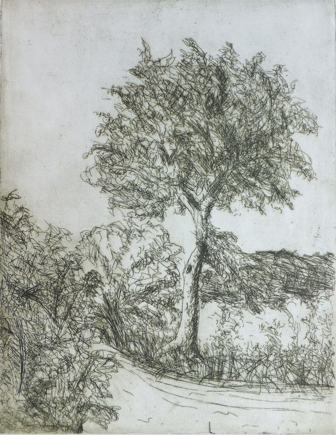 Johanna Schott // Baum // Radierung // 26,5 x 34,5 cm // 1983