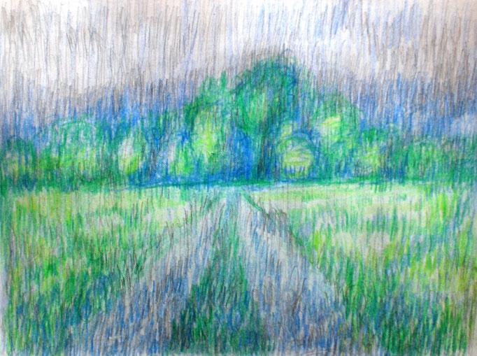 Johanna Schott // Regenwiesen Worpswede // Buntstifte auf Papier // 14,8 x 21 cm // 2013