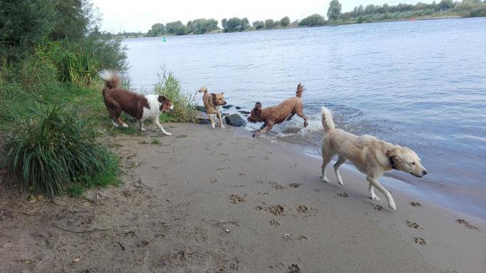 Badestrand für Hundebetreuung.
