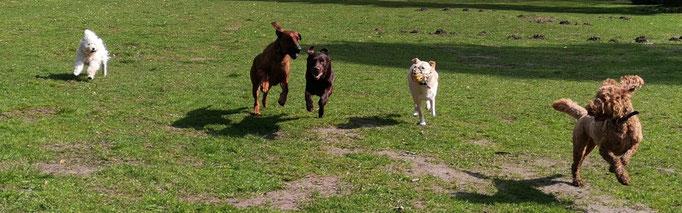 Hundebande läuft.