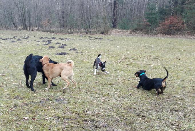 Hundebande im Spielmodus.