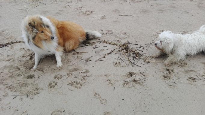 Hundebande am Strand.