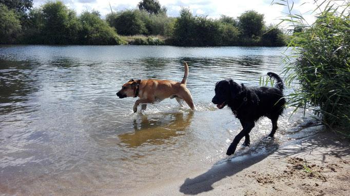 Wasserspiele im Hundeservice.