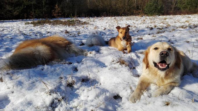 Gassiservice im Schnee.