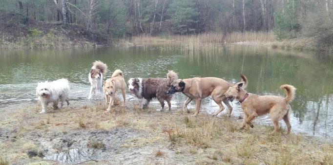 Hundeservice der Hundebande.
