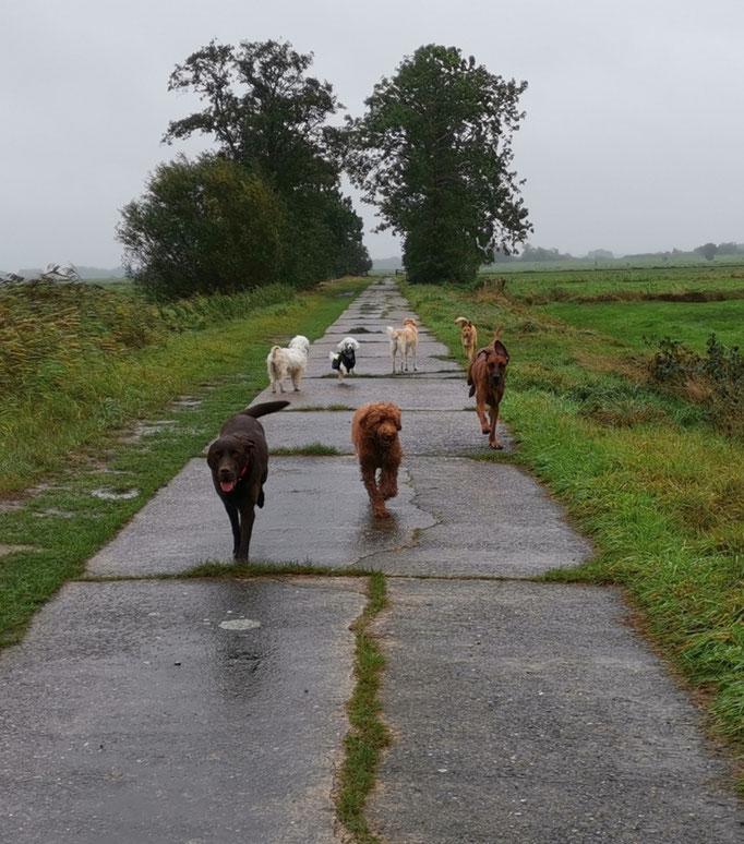 Regen, Weg, Hunde (2).