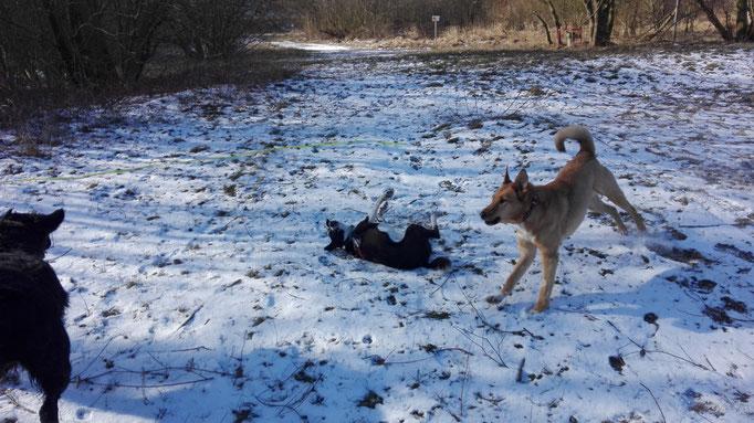Hundesitting im Schnee.