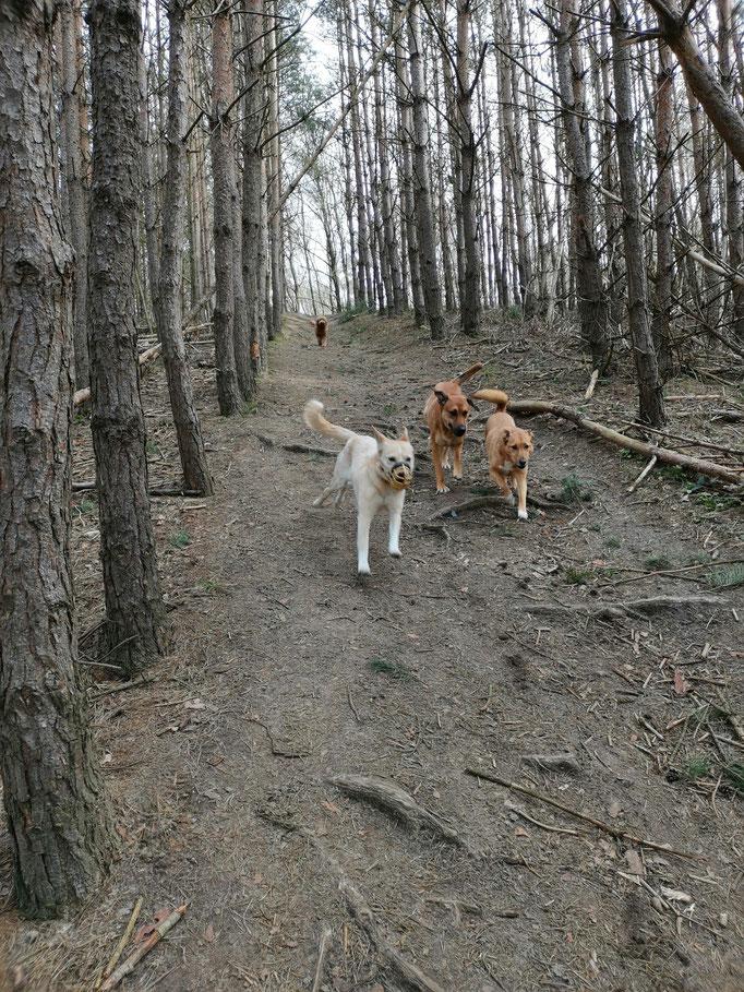 Im Wald unterwegs?