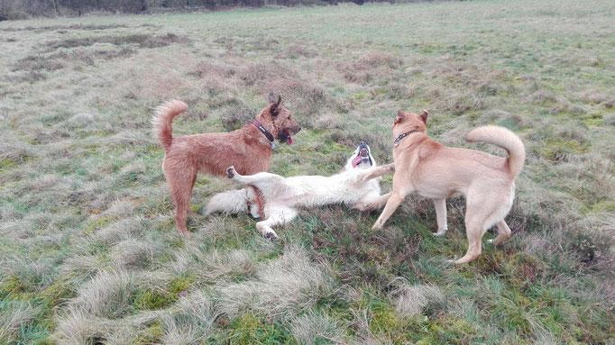 Rauferei während der Hundebetreuung.