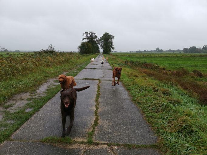 Regen, Weg, Hunde.