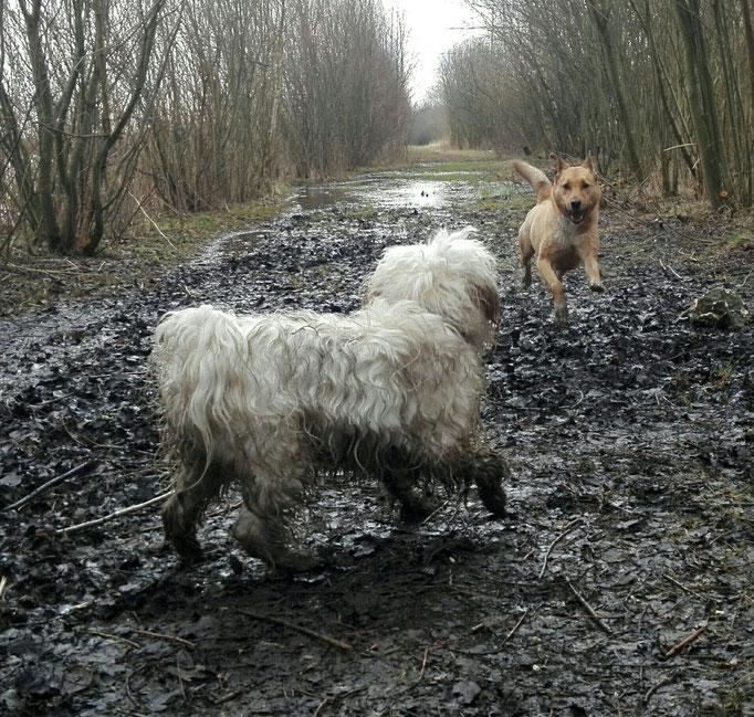 Nur ein dreckiger Hund ist ein guter Hund...