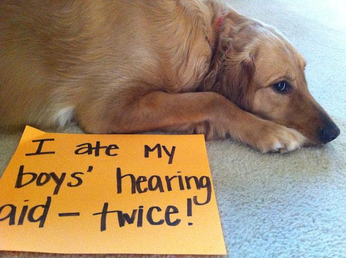 Me he comido el audífono de mi niño/amo, ¡¡¡dos veces!!!