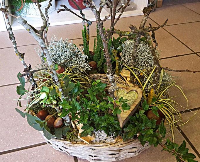 Terrine plantes extérieures