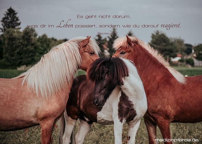 """August, Pferdekalender 2020, im Kalender ohne den Schriftzug: """"medizinpferde.de"""""""