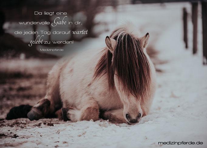"""März, Pferde-Wandkalender 2020, im Kalender ohne den Schriftzug: """"medizinpferde.de"""""""