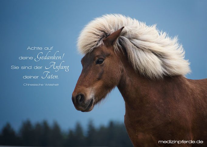 "Juni, Pferde-Wandkalender 2020, im Kalender ohne den Schriftzug: ""medizinpferde.de"""