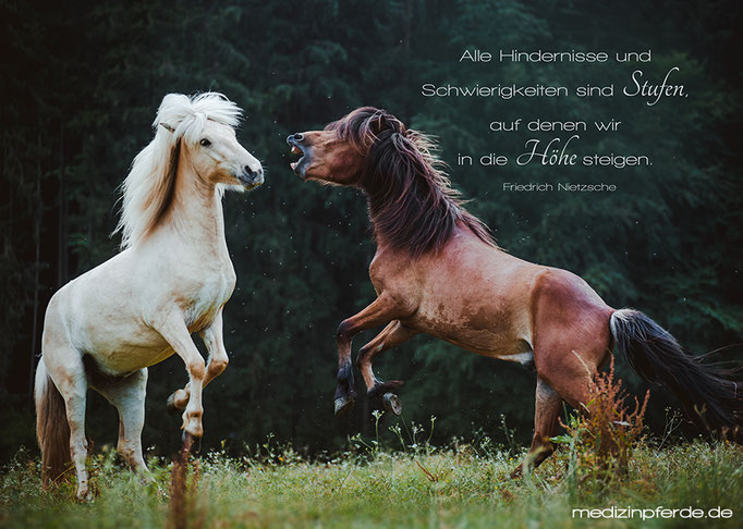 "September,  Pferdekalender 2020, im Kalender ohne den Schriftzug: ""medizinpferde.de"""