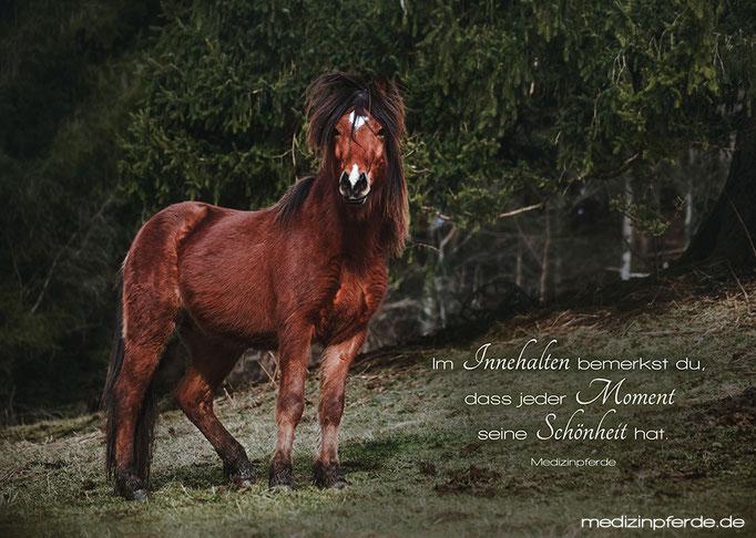 "November,  Pferdekalender 2020, im Kalender ohne den Schriftzug: ""medizinpferde.de"""