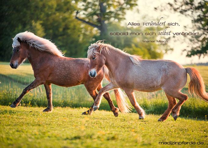 "Mai, Pferde-Wandkalender 2020, im Kalender ohne den Schriftzug: ""medizinpferde.de"""