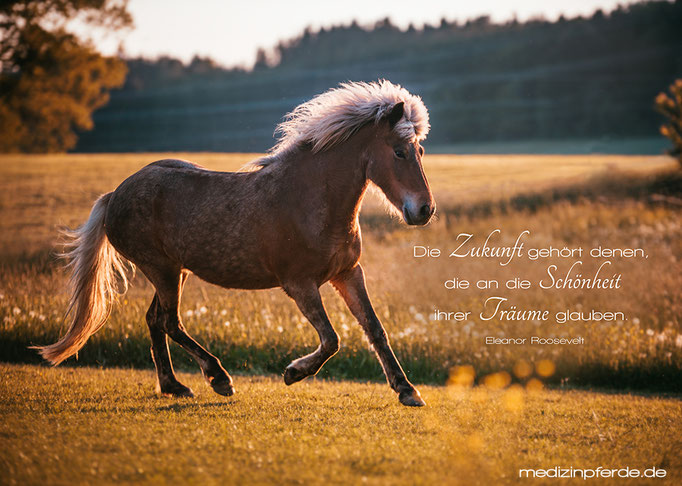 "Oktober,  Pferdekalender 2020, im Kalender ohne den Schriftzug: ""medizinpferde.de"""