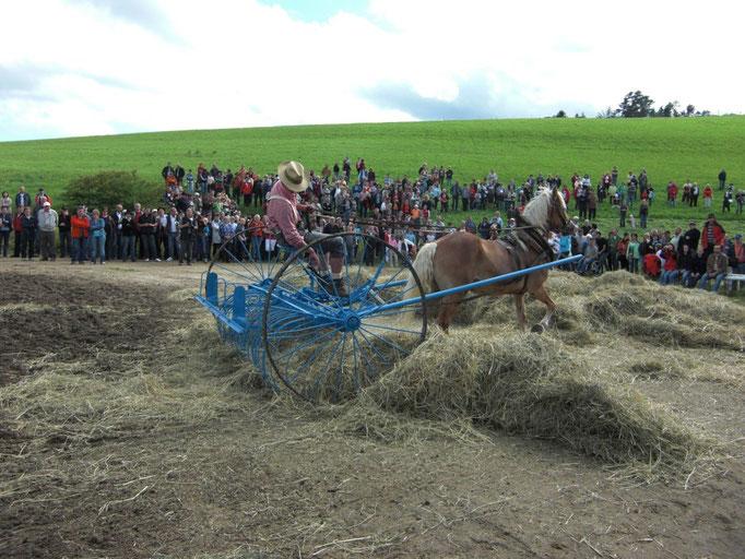 Pferdefest der Region Schönau