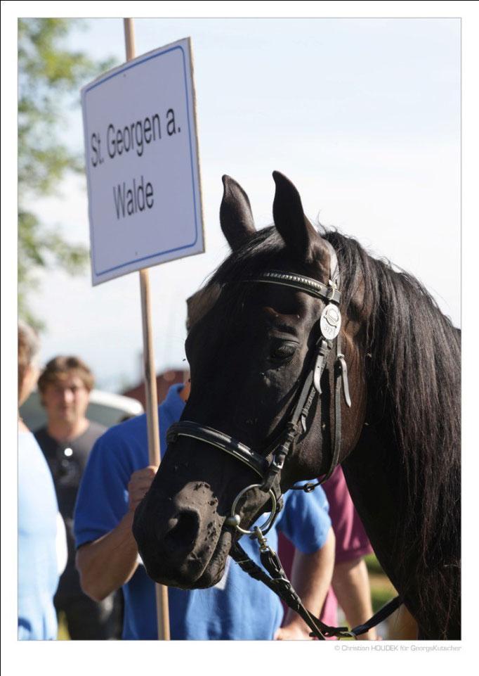 Pferdefest der Region