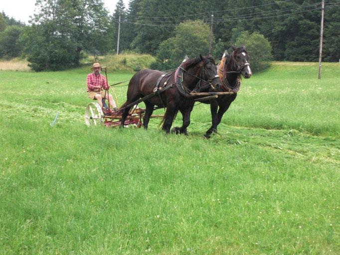 ORF Dreh für Pferdefest der Region