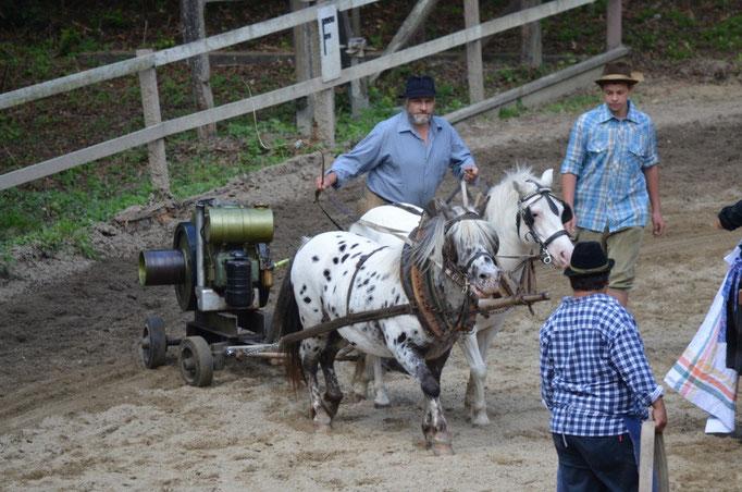 Pferdefest der Region - Heimelsteiner