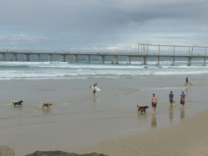 Surfers Paradies 3