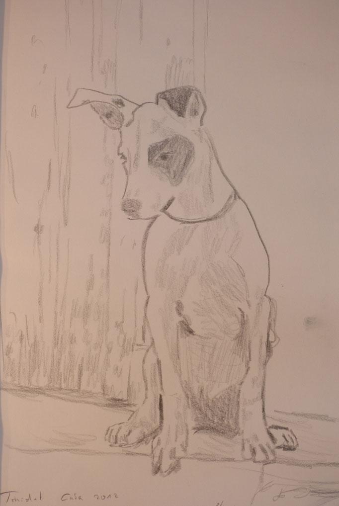"""Bleistift auf Papier  """"Havanna Dog"""""""