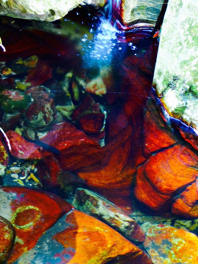 Carnarvon Gorge ,Felsen unter Wasser