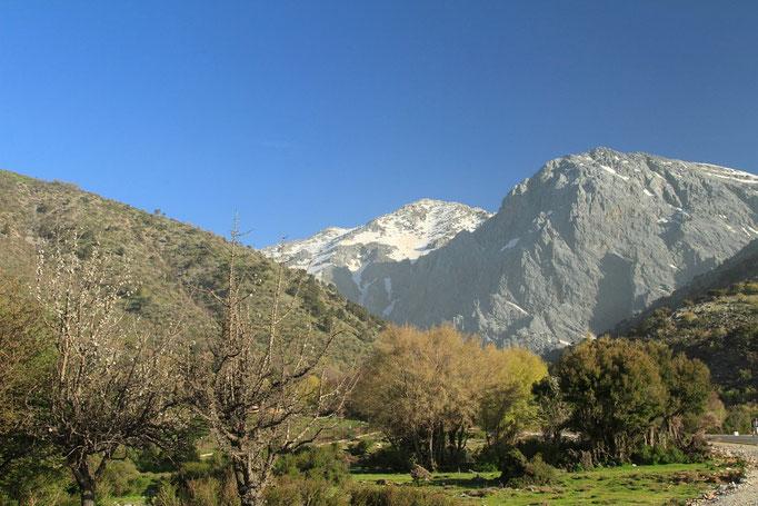 Sur le plateau d'omalos alt 1200 m